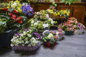 Il Faggio negozio di vendita piante e fiori artificiali Torino e Online